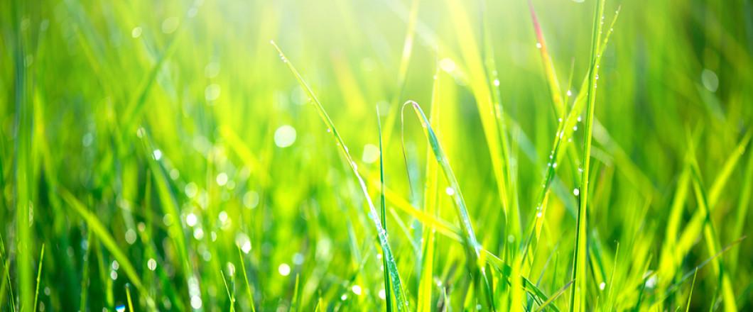 lawn, cheyenne wy