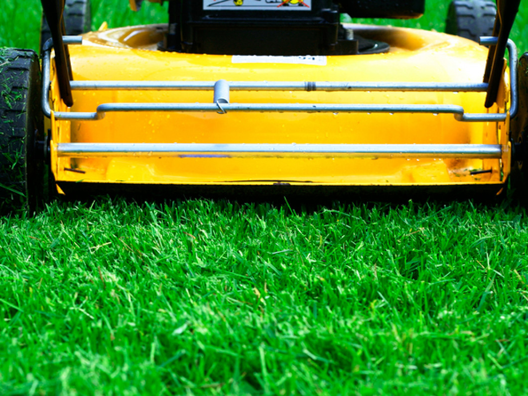 3 reasons to hire us for lawn maintenance services