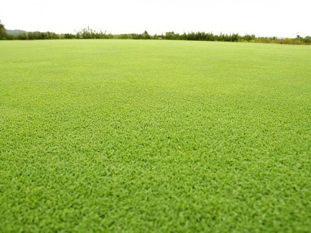 Liquid Lawn Fertilizer Cheyenne Wy Maverick Lawn